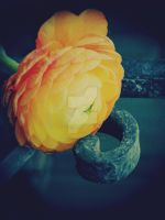 Ranunculus Series III... by EternityRaven