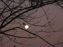 Morning Moon 1 by Night-Forager