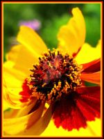 Fire flower by Tap-Photo-and-Co