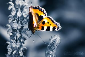 Blunge Butterfly by TheRedLightning