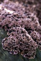 Fungal Flow by organicvision