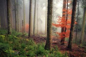 Warm Fog by FlorentCourty