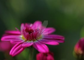 unidentified hovering pink... by clochartist-photo