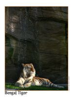 As relaxed as a.. Bengal Tiger by djsteen