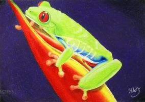 Colorful Red Eyed Tree Frog by KW-Scott