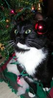 Holiday Kitty The ornaments by Melrainbow