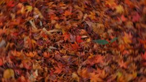 Autumn Abstract 08 by theblindalley