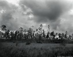 South Florida III by RoBBoX
