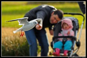And That's A Seagull Son by andy-j-s
