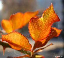 autumn gift6 by malaladanila