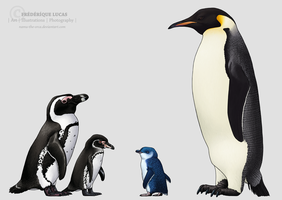 Four penguin species by namu-the-orca