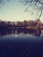 Swans 2 by FrantisekSpurny