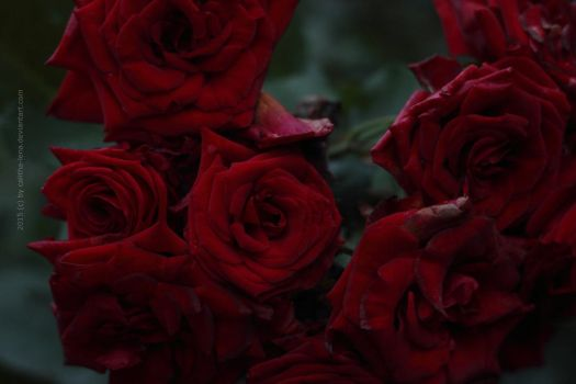 [7/10] Bloody fineness by Calitha-Lena