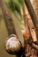 Snail in a Tree by Little-Miss-Splendid