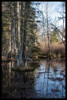 forest water 3 by smeghead1976