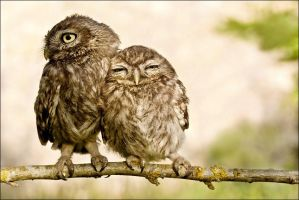 owl love by littlebuck