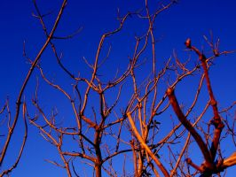 Branches by Shinetop