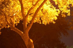 Yellow Trees by Allie991