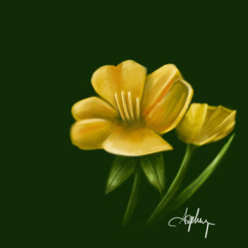 May flower by asphyx0r