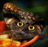 The Owl and the Butterfly by hallbe