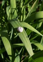 Snail Travels 1 by para-vine