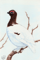 Winterbirds - Willow Ptarmigan by twapa