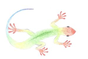 Gecko by Mikey-Spillers