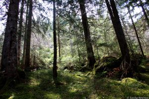 Forest by EmilieBouvier