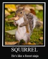 SQUIRREL by Hellion-Kat