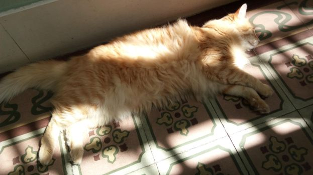 my cat toulouse sleep with sun by Die-Rose