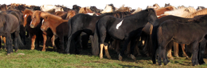 Lots of Horses Stock 2 by thevirtualgaucho