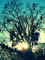 Spanish Moss by JNS0316