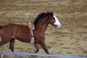 STOCK 2013 Rodeo-133 by fillyrox