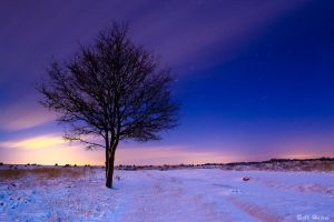 cold tree by Al-Hajem