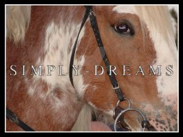 Ziggy Ready To Ride by Simply-Dreams