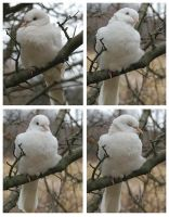the white dove x4 by weirdklown