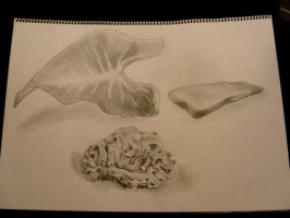 Coral, Leaf and a lame ass rock by Ultimaodin