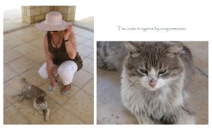 two cats in cyprus by crayonmaniac