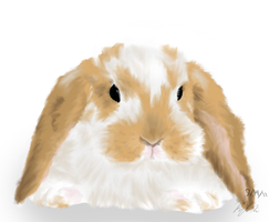 Just a Little Bunny by BunnyFroofroo