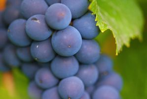 Grapes by maXXie15