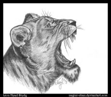 Drawing Practice #7 ~ Lion Head Study by nagini-chan
