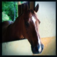Hipstamatic Horse by iwonderbc