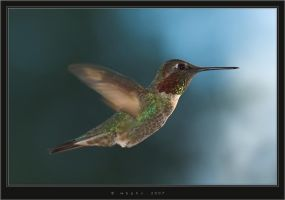 Hummingbird 4.16.E by HogRider