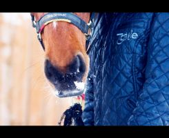 snownose bobby by equinelovex