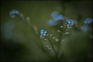 Blue buttons by LiveInPix