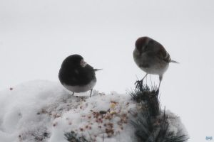 Snowy Birds Series #3 by LifeThroughALens84