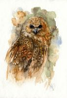 Fishing owl by wolf-minori