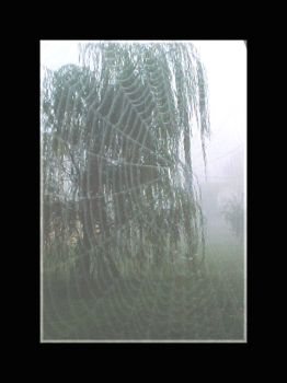 A Web In The Fog by ladynightseduction