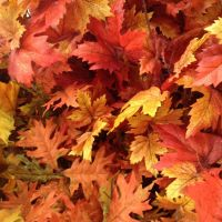 Fake Fall Leaves by MoonStarTwilit
