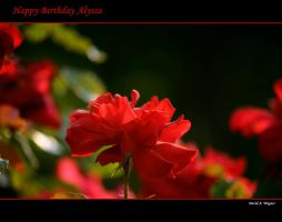 Happy Birthday Alyssa by David-A-Wagner